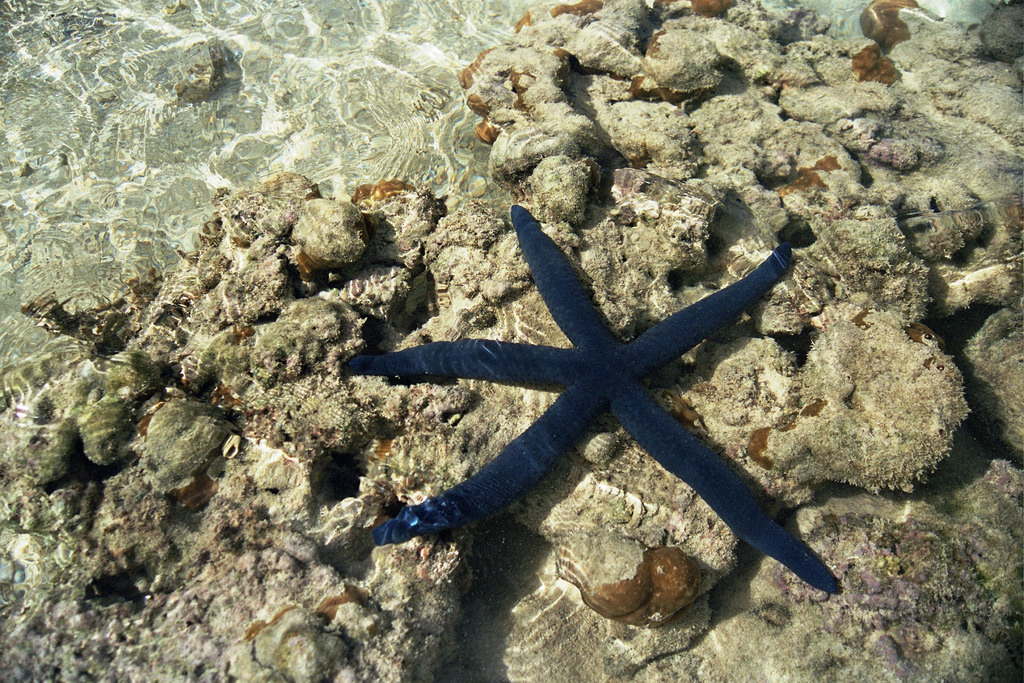 credit: Etu Moana - The Blue Starfish by DarrenHunter